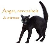katten-angst,nervositeitstress[1]